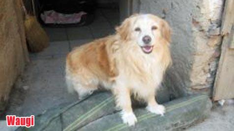 Hunde suchen ein Zuhause (Bild: Tierschutzverein Klosterneuburg)
