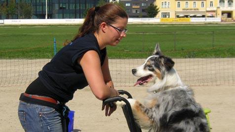 1. Wiener Hundetag begeisterte Hundefreunde (Bild: krone.at-Leserreporter)