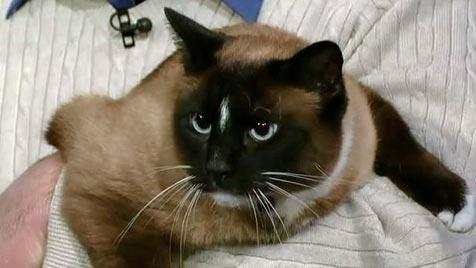 """Diebische Katze """"Dusty"""" wurde zum Medienstar (Bild: YouTube.com)"""