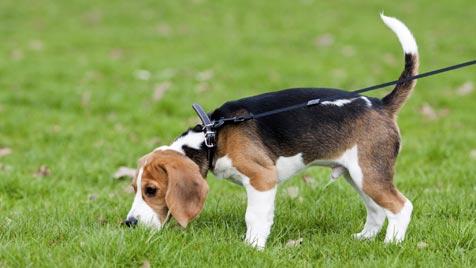 Was tun, um den Hund vor Giftködern zu schützen? (Bild: Photos.com/Getty Images)