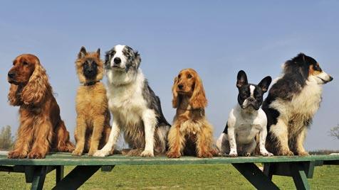 Wie du für dich die passende Hunderasse findest (Bild: Photos.com/Getty Images)