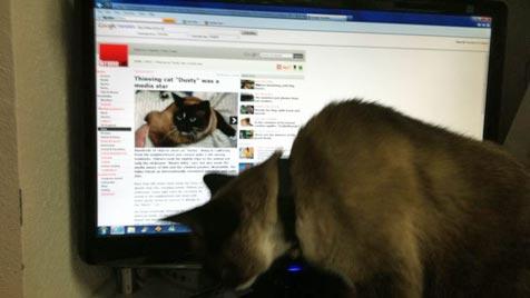 """Diebische Katze """"Dusty"""" wurde zum Medienstar (Bild: Jean Chu)"""