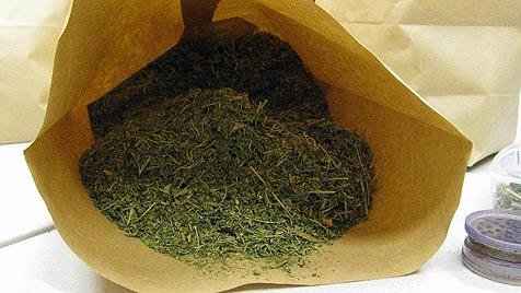 Polizei stellt knapp 400 Marihuana-Pflanzen sicher (Bild: SID Niederösterreich)
