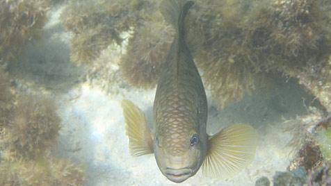 Traumhafte Strände und ein frecher Fisch auf Mauritius (Bild: Wolfgang Kopacka)