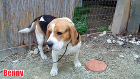 Hunde suchen ein neues Zuhause (Bild: TSV Klosterneuburg)