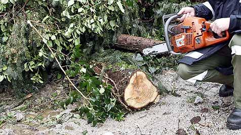 Unbekannter sägte 18 Fichten an - in Garten gekracht (Bild: Markus Tschepp)