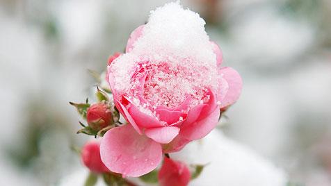 Hübsche Farbtupfer für deinen Garten im Winter (Bild: thinkstockphotos.de)