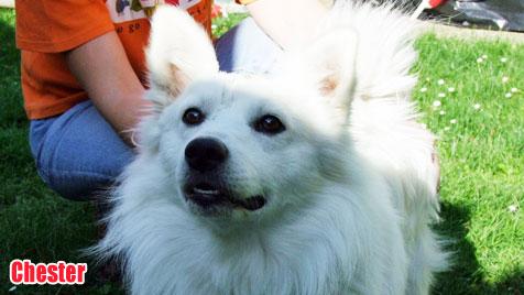 Hunde suchen ein neues Zuhause (Bild: Tierheim Bruck)