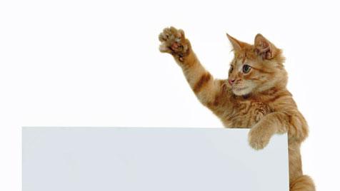 So wählst du das richtige Spielzeug für deine Katze (Bild: © 2011 Photos.com, a division of Getty Images)