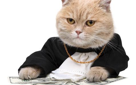 Deutschland diskutiert eine Katzensteuer (Bild: thinkstockphotos.de)