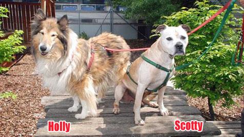 Hunde suchen ein neues Zuhause (Bild: Tierschutzhaus Vösendorf)