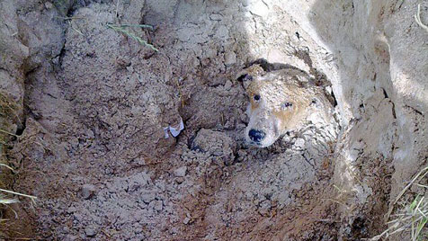 Lebendig begrabene Hündin in Kapstadt gerettet (Bild: Facebook)