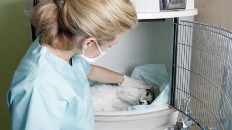 Fakten über Krebs beim Haustier und seine Behandlung (Bild: thinkstockphotos.de)