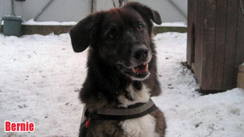Hunde suchen ein neues Zuhause (Bild: Wiener Tierschutzhaus, Vösendorf)