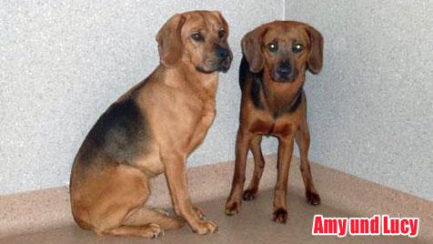Hunde suchen ein neues Zuhause (Bild: Tierschutzverein Schwarzatal)