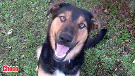 Hunde suchen ein neues Zuhause (Bild: Animal Care International)