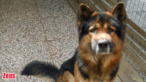 Hunde suchen ein neues Zuhause (Bild: Tierpension Arche Noah)