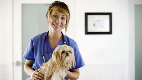 Wie du Vierbeinern den Besuch beim Tierarzt erleichterst (Bild: thinkstockphotos.de)