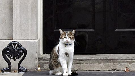 """Premier Cameron verteidigt seine Dienstkatze """"Larry"""" (Bild: EPA)"""