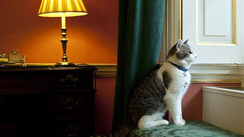 """Premier Cameron verteidigt seine Dienstkatze """"Larry"""" (Bild: AP)"""