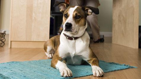 """WTV: """"Erhöhung der Hundesteuer nicht ausreichend"""" (Bild: Photos.com/Getty Images)"""