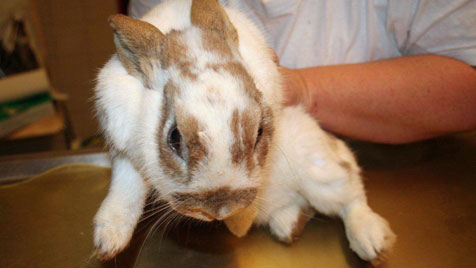 Die Kaninchen-Plage von Ottenthal eskaliert (Bild: Kaninchen-Helpline)