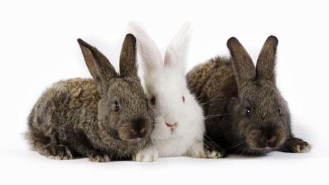 """""""Vier Pfoten"""": """"Schon aus Tierschutzgründen"""" (Bild: [2011] JupiterImages Corporation)"""