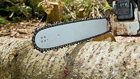 Zwölfjähriger beim Holzfällen von Baum erschlagen (Bild: thinkstockphotos.de)