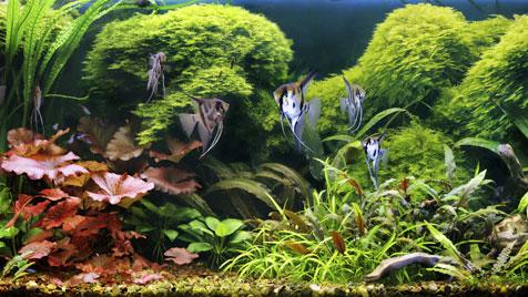 Fische zeigen im Schlaf faszinierende Verhaltensweisen (Bild: thinkstockphotos.de)