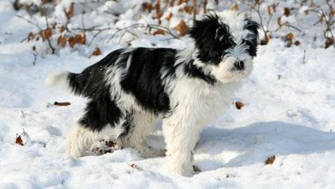 So helfen Sie Ihrem Hund durch die kalte Jahreszeit (Bild: thinkstockphotos.de)