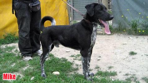 Hunde suchen ein neues Zuhause (Bild: Tierheim Vösendorf)