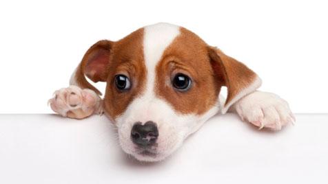 Die richtige Ernährung von Hundebabies (Bild: Photos.com/Getty Images)