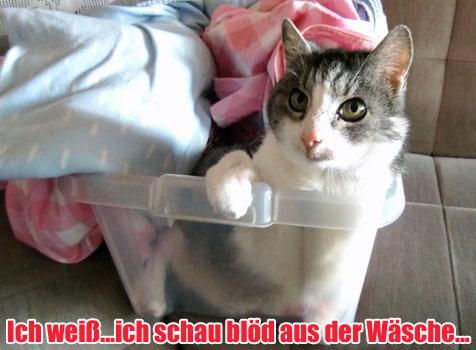 Wuchtln 2011: Ida Schirnberger (Bild: Ida Schirnberger)