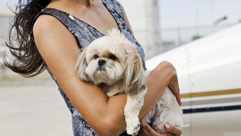 Ausgebüchster Hund legt ganzen Flughafen lahm (Bild: thinkstockphotos.de)