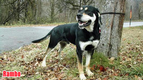 Hunde suchen ein neues Zuhause (Bild: Tierheim Steyr)