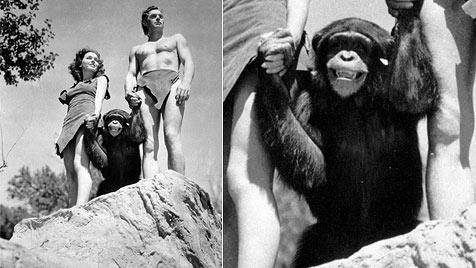 Berühmter Tarzan-Affe Cheetah starb am Heiligen Abend (Bild: AP)