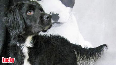 Hunde suchen ein neues Zuhause (Bild: Tierschutzverein Kärnten)