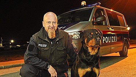"""Polizeihund """"Orak"""" stöbert Einbrecher-Duo in Salzburg auf (Bild: Markus Tschepp)"""