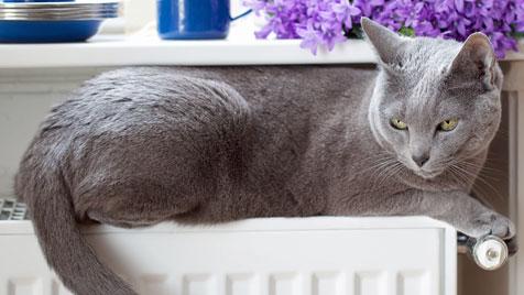Katzen mögen es im Winter kuschelig (Bild: thinkstockphotos.de)