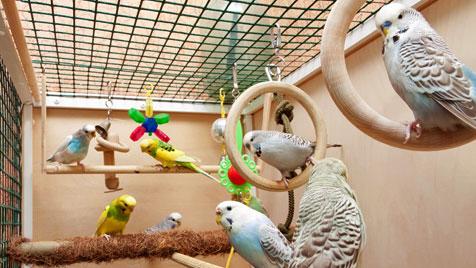 So kommen Ziervögel gut ins neue Jahr (Bild: thinkstockphotos.de)