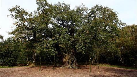 Im Sherwood Forest kann man heiraten wie Robin Hood (Bild: AP)