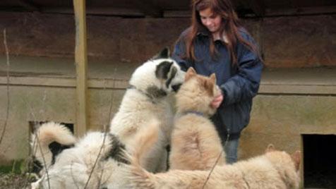 Schlittenhunde aus grausamer Haltung gerettet (Bild: Tierschutzstelle Freistadt)