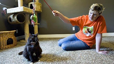 Diese Katze in den USA überlebte zwei Einschläferungen (Bild: AP)