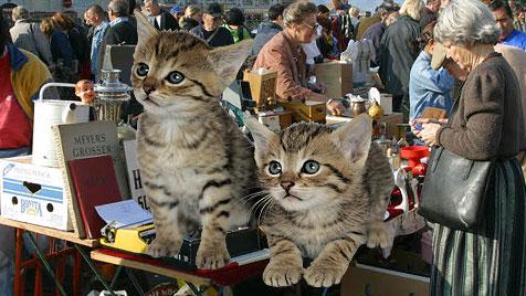Werden aus Katzen im Burgenland Schlüsselanhänger? (Bild: Klemens Groh/Votava)