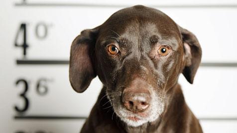 """Nun wurde auch ein Hund aus OÖ zum """"Brandstifter"""" (Bild: thinkstockphotos.de)"""