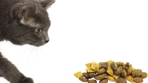 Wie man mit einer mäkligen Katze umgeht (Bild: thinkstockphotos.de)