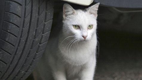 Tierquäler feuert im Burgenland mit Flinte auf Katzen (Bild: thinkstockphotos.de)
