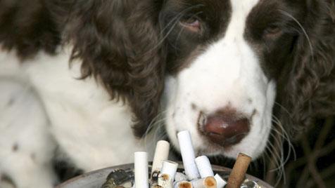 Passivrauchen auch für Haustiere höchst schädlich (Bild: thinkstockphotos.de)