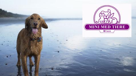 Reisekrankheiten beim Haustier und die Gefahr für Halter (Bild: thinkstockphotos.de/Mini Med Tiere)