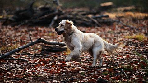 Brutaler Kärntner Tierquäler wurde ausgeforscht (Bild: thinkstockphotos.de)